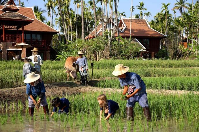 47 Kids Rice Planting